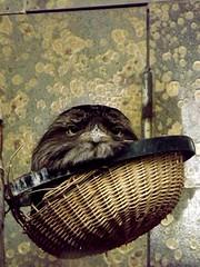 Bird in a basket (yve_all) Tags: vogel bird natur nature tiere animals blickwinkel view crazyanimals verrcktetiere