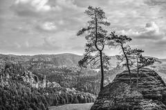 trees (Ke_Si) Tags: trees nature schsischeschweiz germany deutschland landscape landschft natur schwarzweis monochrome bw blackandwhite stimmung ausblick ferne smkphoto noir et blanche