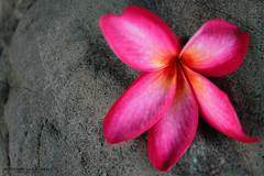 Fiore lilla (Anderama1) Tags: lilla rosa fucsia petalo petali pietra allaperto