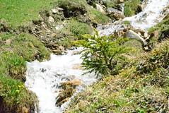 DSC_4054 (d90-fan) Tags: rauris raurisertal natur alpen salzburgerland sterreich nationalpark npht hohe tauern wandern krumltal seidlwinkeltal