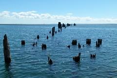 Blue Yonder (PGK88) Tags: dock abandoned abandoneddock horizon perspective distance posts pilings derelict blue water seascape