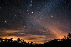 Lightscape (VPMPhoto) Tags: nightscape lightscape landscape paisaje astro astrophotography astrophoto estrellas rayos de sol sunlight sunrise trees forest araucaria araucana chile nahuelbuta nikon d750 tokina 1735 ngc