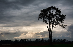 Clearing storm (Thankful!) Tags: storm clouds sunlight wind windy lonely lonetree rural country afternoon