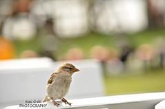 What is on menu today ... ? #bird #nature #bokeh (mac d-ski photography) Tags: bokeh dof bird animal nature green closeup nikon mac macdskiphotography whatisonmenutoday