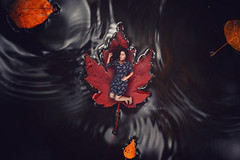Here comes the Autumn (Marina Gondra) Tags: autumn miniature conceptual nikon marinagondra leaf otoo river black leaves red