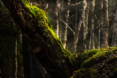Hit by sunrays (Troutfisher266) Tags: norway colors moss nikon forest light nature srtrndelag no