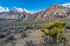 048-RRC160201_46933 (LDELD) Tags: lasvegas nevada unitedstates us desert rugged dry rocks sand formations redrocknationalconservationarea mountains scenic landsscape cactus yucca