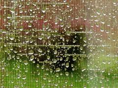 autumn rain (saudades1000) Tags: droplets rain wet rainy abstract
