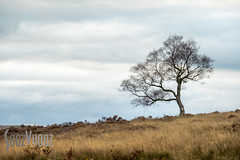 Leafless (Sue_Hutton) Tags: derbyshire hannahgrinham michaellauphotography october2016 peakdistrict surpriseview autumn lonetree model outdoor poses workshop