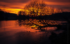 hanging tree (Florian Grundstein) Tags: sunset tree silhouette light shadow upperpalatinate bavaria teublitz lake weiher see wasser water reflection sundown sun red beautifullight nopeople nature cffaa