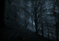Through Moonlit Realms of Spirits Old (Andrea Effulge) Tags: forest dark atmospheric moonlit moonlight silence magical misty fog foggy dreamscape dream dreaming wandering soul spirit nature magicofnature mountainforest woods
