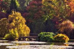 Autumn at Sheffield Park (larryvanhowe) Tags: autumn subject sheffieldpark sussex unitedkingdom europe places