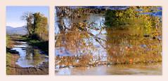 La gadoue, la gadoue... (Raymonde Contensous) Tags: neschers auvergne puydedôme nature campagne automne paysage boue reflets chemins arbres noyers