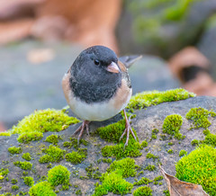 Not many around. (Omygodtom) Tags: wildlife wild outdoors bokeh bird green moss abstract animalplanet animal natural wood nature nikon d7100 nikon70300mmvrlens flickr existinglight explorer fly senery setting scene scenic urbunnature usgs