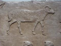 Ram (Aidan McRae Thomson) Tags: nimrud relief britishmuseum london assyrian sculpture mesopotamia ancient