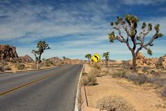 Lonely road (uhx72) Tags: california unitedstates landscape joshua tree nationalpark sky clouds stone street