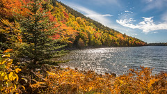 Beautiful color play (hjuengst) Tags: usa jordanpond colourful autumn fall maine lake forest wood