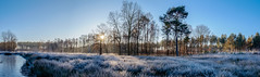 Blue morning (Guy L Janssens) Tags: belgi seizoenen landschap averbodebosheide winter belgium landscape seasons