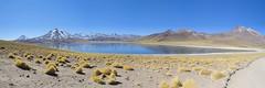 Laguna Miscanti (monto84) Tags: américa américadelsur chile desiertodeatacama formato formato3x1 fotografíapaisaje lagunamiscanti lagunasaltiplánicas panorámica regióndeantofagasta reservanacionallosflamencos
