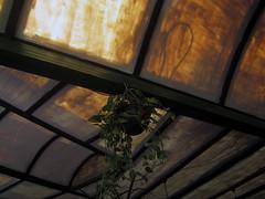 la salamandra (maximorgana) Tags: glass crystal ceiling hanging cartagena maceta lasalamandra