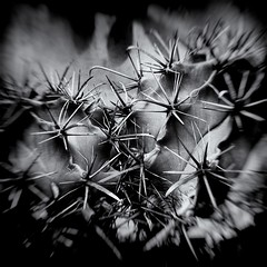 Nature (Sergio Giannotta) Tags: blackandwhite nature biancoenero analogico