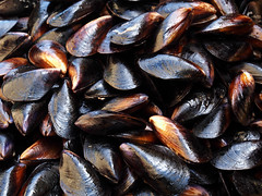 mussels (Igor Golovnov) Tags: life sea food pets black color macro animals dinner turkey lunch healthy raw pattern market eating group large shell grand nobody gourmet meal shellfish backgrounds seafood appetizer mussels heap preparation protein izmir prepared bazzarr