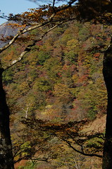 autumn leaves (Napolitan) Tags: mountain japan kanagawa nabewariyama