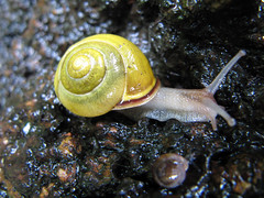 Snail (jschumacher) Tags: nyc wet snail morningsidepark