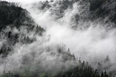 Break in the Rain (b_skillin) Tags: trees mist canada clouds landscape bc pittlake widgeoncreek