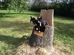 Wooden throne (ndh) Tags: ontario canada dogs animals ottawa spike wally