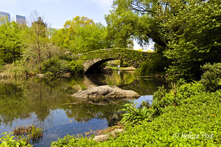 A Bridge in Central Park