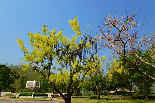 Trees near Srinakarin dam in Kanchanaburi province, Thailand