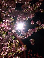 IMG_20150418_230312 (edelvia14) Tags: fleurs rouen printemps nexus floraison