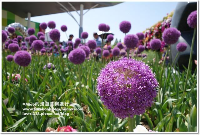 고양국제꽃박람회054
