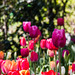 """2015_Floralia_Brussels-62 • <a style=""""font-size:0.8em;"""" href=""""http://www.flickr.com/photos/100070713@N08/17643968888/"""" target=""""_blank"""">View on Flickr</a>"""