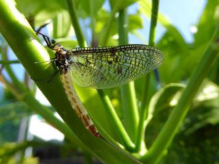 Mayfly [Explored 17/05]
