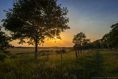 Abendstimmung (Der__Dan) Tags: trees sunset summer sun tree zeiss germany landscape deutschland evening abend sonnenuntergang sony 28mm contax 28 flughafen alpha landschaft sonne augustin yashica baum rheinland heide sankt novoflex distagon abendstimmung 7r hangelar a7r awardflickrbest zeissdistagon28mmf28 ilce7r hangelarer