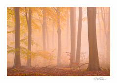 Autumn Beech Wood (George-Edwards) Tags: wood uk morning autumn trees light england cloud mist colour fall nature leaves fog rural forest sunrise woodland landscape outdoors dawn countryside nikon seasons atmosphere berkshire beech bucklebury georgeedwards
