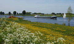 DSC01166 (ditmaliepaard) Tags: zeilboot pontje heusden demaas vrachtschip veerpontherptbernrivierdemaas