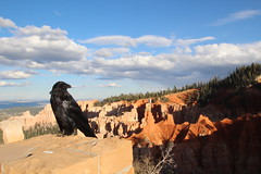 Raven (rustoleumlove) Tags: park bird nature pose landscape utah nationalpark canyon national bryce geology brycecanyon