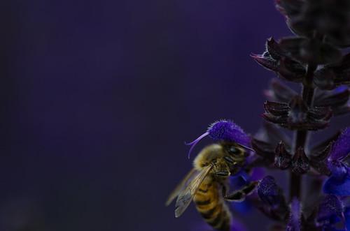 The bees are back! ©  Still ePsiLoN