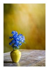 A Study in Yellow, Montsalvat (red stilletto) Tags: montsalvat artist yellow blue vase flowers art canvas stilllife famousflickrfive