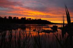 Sunset behind the reeds (Justin Strackbein) Tags: sonnenuntergang sunset sweden schweden baltic sea ostsee bottnischer meerbusen bottenhavet steine stones schilf reed