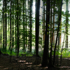 im Wald. 25.09.2016 I (Werner Schnell Images (2.stream)) Tags: ws wald forest baum bume trees tree