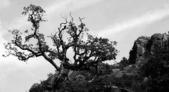 tree (isabellerosenberg) Tags: portugal national park nationalpark geres penedageres nature trip hike