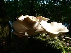 catching the light (achatphoenix) Tags: fungus pilz wald forest lichtundschatten waldsee