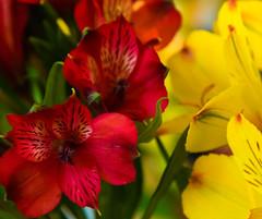 PI3A7674 Keukenhof, Lisse Netherlands (EJK41) Tags: keukenhof flowershow
