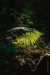 Leaf (imagomagia) Tags: art artphoto artphotography autumn cinematography forest green leaf nature sweden