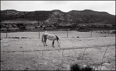 La Joya, Andalucia, Spain. (Dmitry Yurchenko) Tags: andalucia andalusia spain cabodegata lajoya landscape almeria canoneos30 ilfordhp5 bw horse rancho