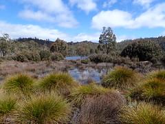 Lake King William (dracophylla) Tags: lakekingwilliam tasmania